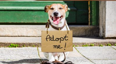 Adoption Day @ Laurel Oaks Garden Center | Evesham | New Jersey | United States